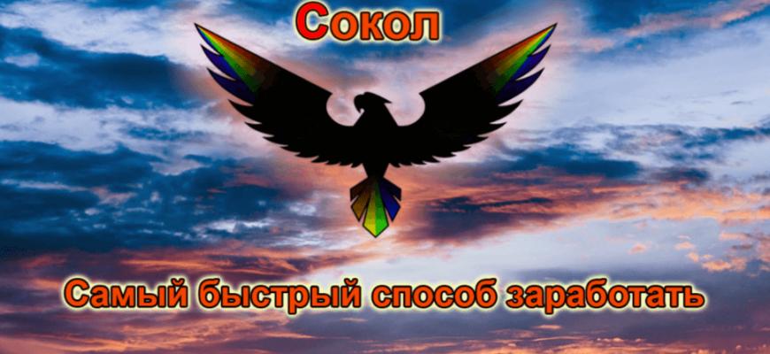 Курс Сокол